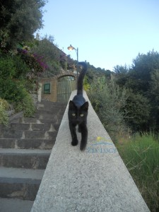 gatto degli dei1