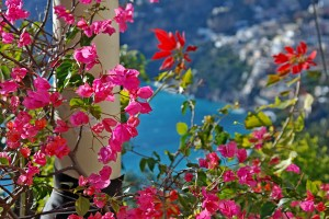 bouganvilles in Positano
