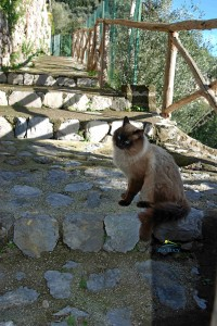 cat from Positano